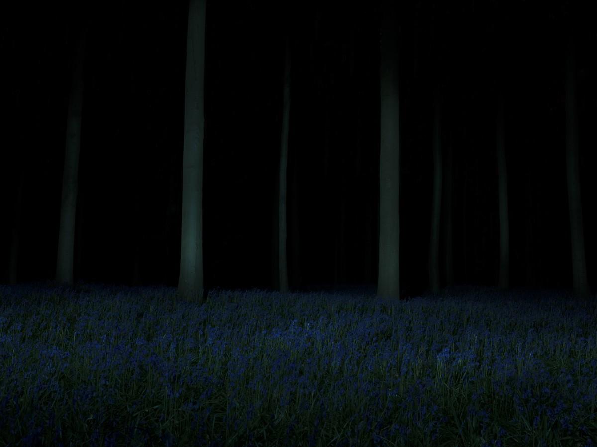 b A Forest 8bit lg